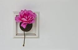 Rose in a white door. Detailed view of a rose y a white door. Seen in Vilagarcía de Arousa, Spain Stock Image
