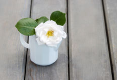 Rose in white jug on wooden table Royalty Free Stock Image