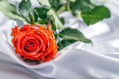 Rose on white satin. Royalty Free Stock Photos