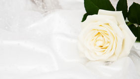 Rose on white silk background Royalty Free Stock Photography