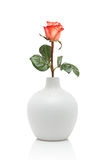 Rose in white vase Stock Image