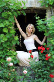 The rose window Stock Photo