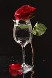 Rose and wine glass of water Royalty Free Stock Photos