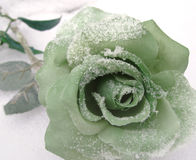 Green Silk Rose in Winter Snow. Green silk artificial rose laying in the snow in winter royalty free stock photo