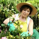 Rose woman Royalty Free Stock Photo