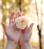 Rose in women's hands Stock Photo