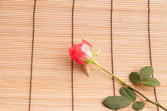 Rose on wood background. Royalty Free Stock Images