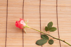 Rose on wood background. Stock Photography