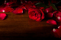 Rose. On wood floor background. Give  to darling in valentine's day. or send love to marry royalty free stock photos