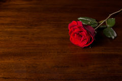 Rose. On wood floor background. Give  to darling in valentine's day. or send love to marry stock images