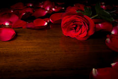 Rose. On wood floor background. Give  to darling in valentine's day. or send love to marry royalty free stock images