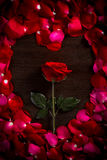 Rose. On wood floor background. And petals  shape is heart. Give  to darling in valentine's day. or send love to marry stock photo