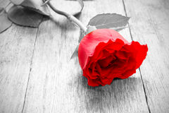 Rose on  wooden floor Stock Photo