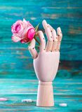 Rose in wooden hand on turquoise background Royalty Free Stock Photo