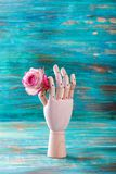Rose in wooden hand on turquoise background Royalty Free Stock Photos