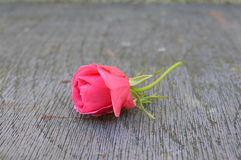 rose on wooden surface Stock Photos