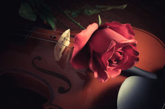 Rose on wooden violin,vintage filtered. Royalty Free Stock Photos