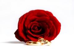 Rose y anillos de bodas Imagen de archivo libre de regalías