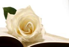 Rose y biblia Imagen de archivo libre de regalías