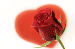Rose y corazón. Fotografía de archivo libre de regalías