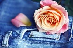 Rose y dril de algodón foto de archivo libre de regalías