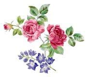 Rose y flor salvaje azul stock de ilustración