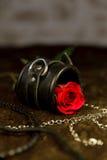 Rose y juguetes eróticos Fotografía de archivo libre de regalías