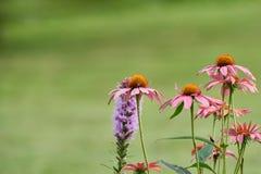 Rose y la púrpura colorearon las flores delante del bokeh verde - detalles 2 del prado Imagenes de archivo