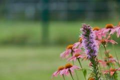 Rose y la púrpura colorearon las flores delante del bokeh verde - detalles del prado Imágenes de archivo libres de regalías
