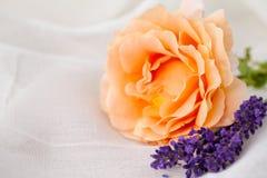 Rose y lavanda Imágenes de archivo libres de regalías