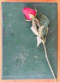 Rose y libro Imagen de archivo libre de regalías