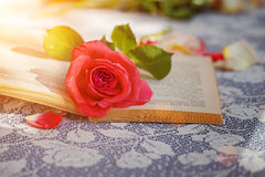 Rose y libro rosados en la tabla en la luz del sol, foco suave valentines imagen de archivo libre de regalías