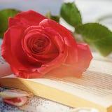 Rose y libro rosados en la tabla en la luz del sol, foco suave valentines fotografía de archivo libre de regalías