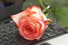 Rose y ordenador Fotografía de archivo