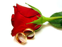 Rose y oro Imagen de archivo