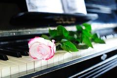 Rose y piano Fotografía de archivo libre de regalías