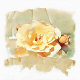 Rose yellow watercolor. Background yellow flowers watercolor style Stock Illustration
