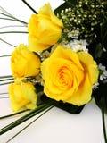 rose yelow Obraz Royalty Free