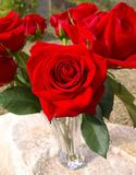 A rose for you Royalty Free Stock Photo