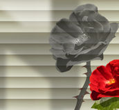 Rose in your Office Royalty Free Stock Photography
