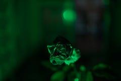 rose zielone Fotografia Royalty Free
