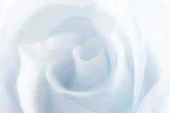 rose zimy Obrazy Royalty Free