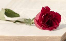 Rose zwischen Buchseite Stockfotos