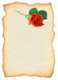 rose zwoju Obraz Stock