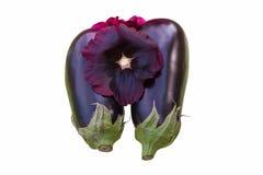 Rosea van bloemalcea met Aubergines van zelfde kleur geïsoleerde ov Royalty-vrije Stock Foto's
