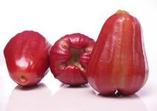 Roseapple Imagem de Stock Royalty Free