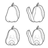 Roseapple. Vector Illustration Hand Drawn Fruit Cartoon Art stock illustration