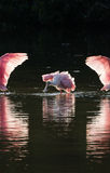 Roseate Spoonbills in the golden hour, J.N. ''Ding'' Darling Nat stock photos