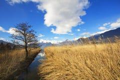 Roseau Photographie stock libre de droits