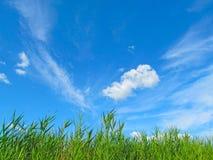 Roseau contre le ciel Images stock